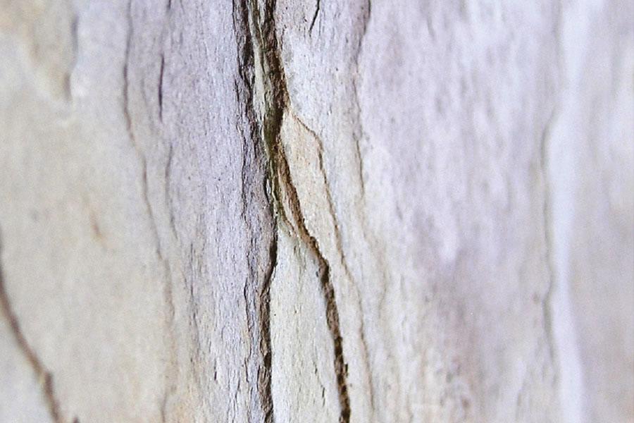 Каменный шпон, где купить в Ростове
